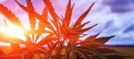 Marijuana in real estate and how cannabis legalization affects your career.